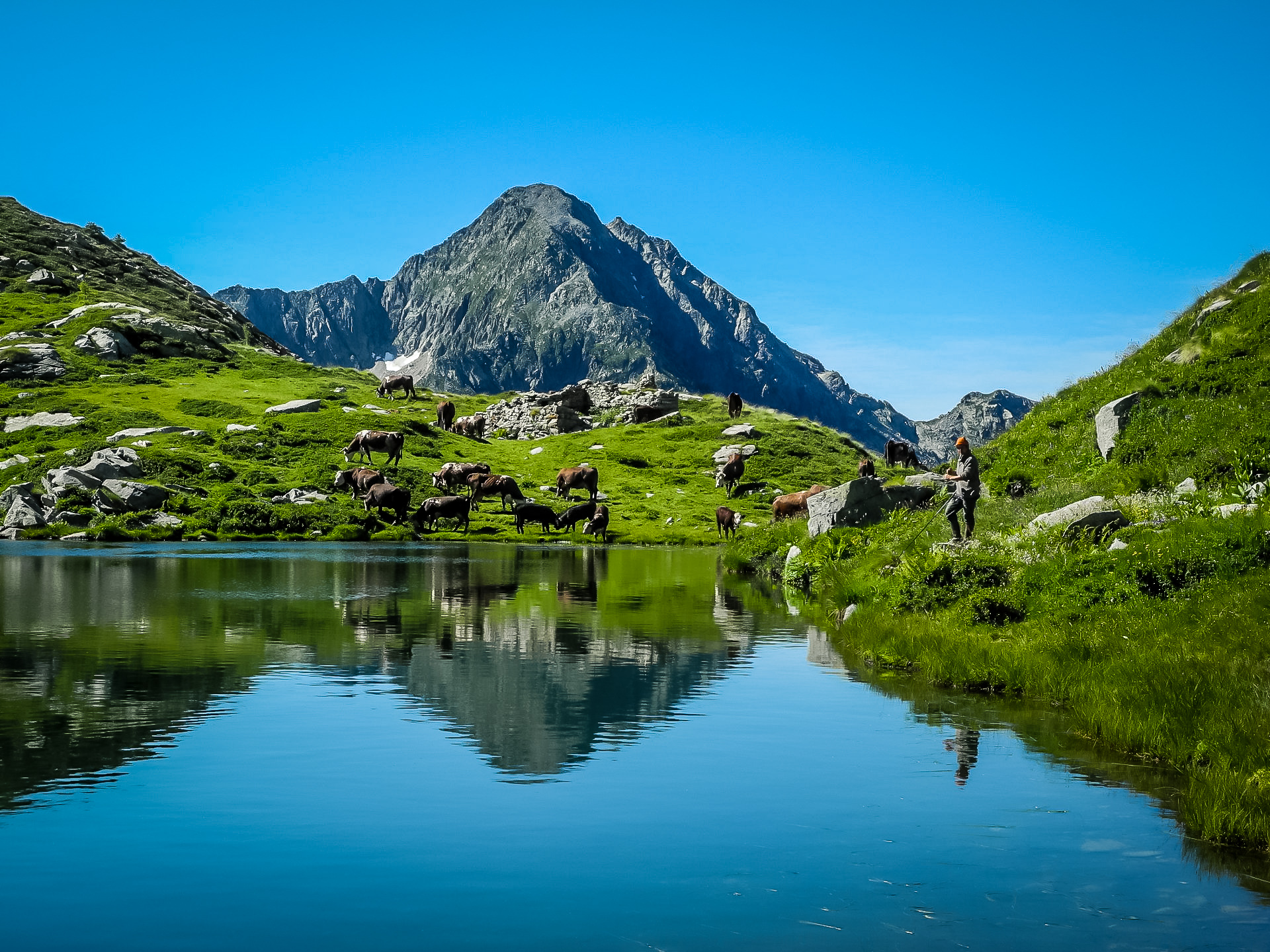Il Lago Torretta (o Fourmoil) circondato dalle mucche al pascolo