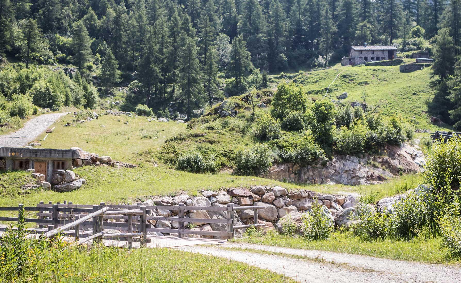 Radure pianeggianti nei pressi dell'Alpeggio di Mattà