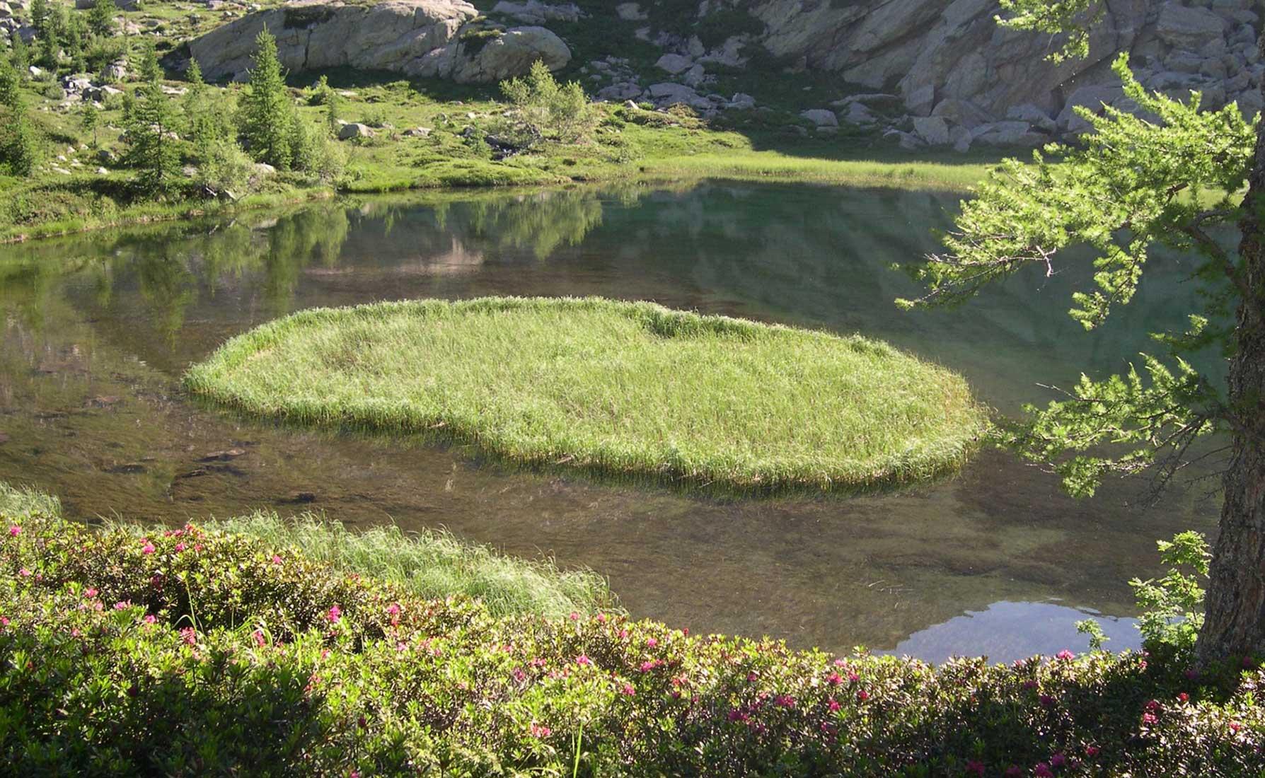 Il Coltellaccio Natante forma una piccola isola nel Lei Long inferiore