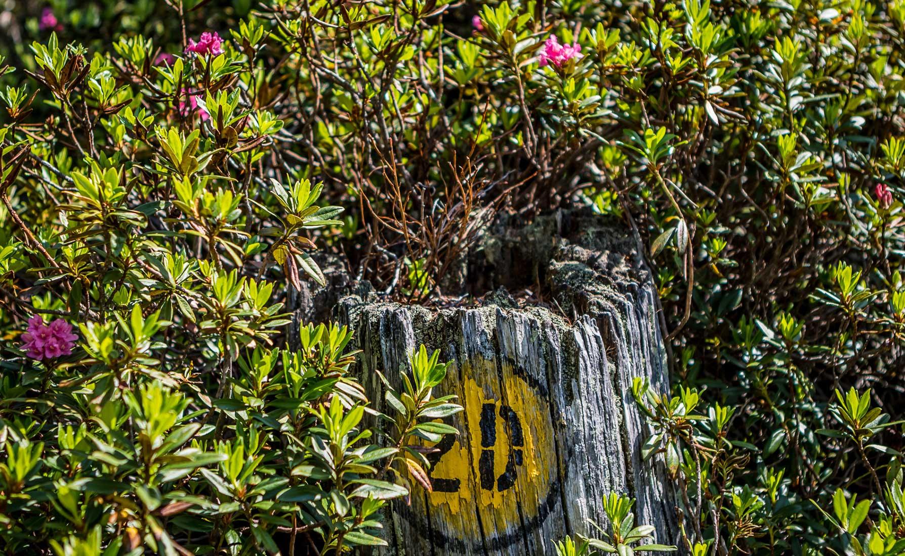 Il segnavia 2D ricoperto di rododendri in fiore