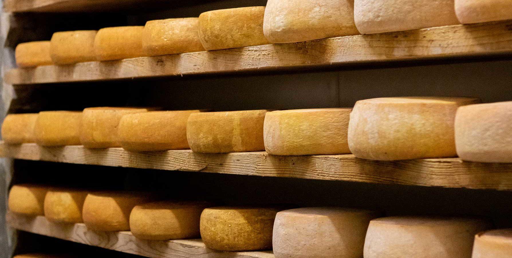 Forme di Toma di Gressoney alla Cooperativa Produttori Latte e Fontina di Fontainemore